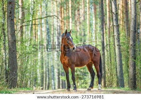 Beautiful bay horse posing in spring forest. - stock photo