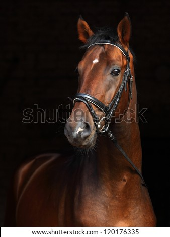 Beautiful bay horse standing in the stable door - stock photo