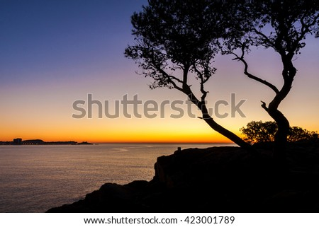 Beautiful beach at sunrise with trees