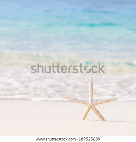 Beautiful beach background, postcard with image of sea star on clear white sandy coastline, day spa, luxury summer vacation concept  - stock photo