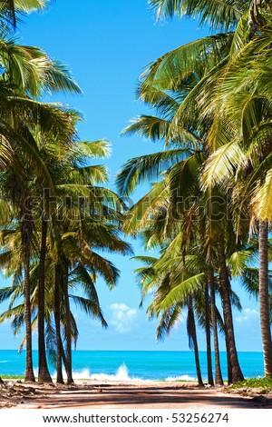 beautiful beach of maracaipe near Porto de Galinhas pernambuco state brazil - stock photo