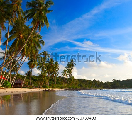 Beautiful beach on tropical coastline and palm trees on the sand. Exotic nature. - stock photo