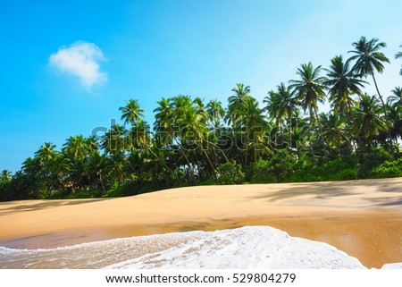 Beautiful beach on tropical island with coconut palm trees and clean sand at clear sunny summer day