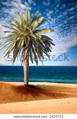 beautiful beach view with palm tree on a sunny day - focus is on sand in the foreground