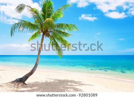 beautiful beach with coconut palm. Koh Lanta, Thailand - stock photo
