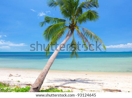 beautiful beach with coconut palm. Koh Samui, Thailand