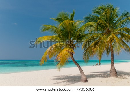 beautiful beach with coconut palm trees - stock photo
