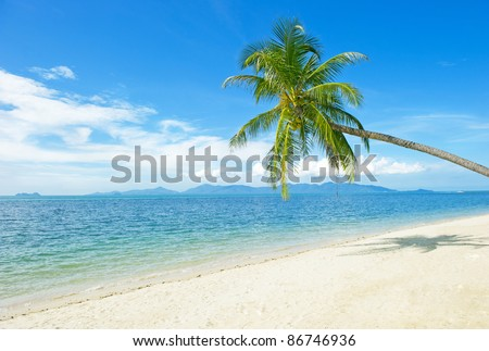 Beautiful beach with palm tree and blue sky