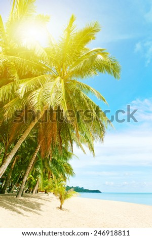Beautiful beach with palm tree over the sand - stock photo