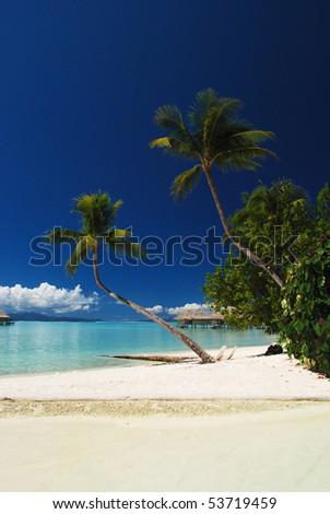 Beautiful beach with 2 palms and lush vegetation - stock photo