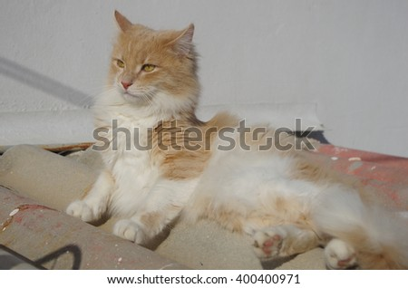Beautiful beige fluffy cat on a roof. - stock photo