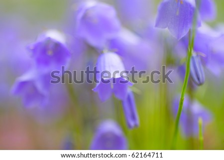 Beautiful bellflowers. Floral field. Shallow focus.