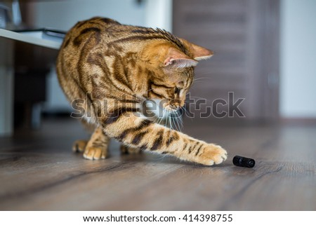 Beautiful bengal cat playing on the floor - stock photo