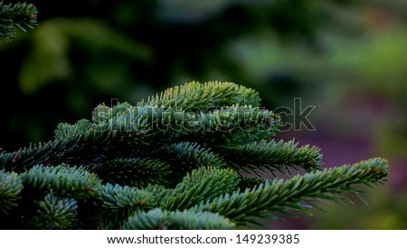 beautiful big green fir branch - stock photo