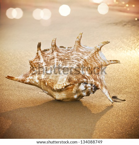 beautiful big seashell lying on sand - stock photo