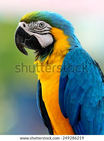 Beautiful bird Blue and Gold Macaw. - stock photo