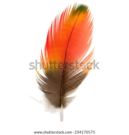 Beautiful bird feathers, Beautiful Macaw feathers, Scarlet Macaw feathers