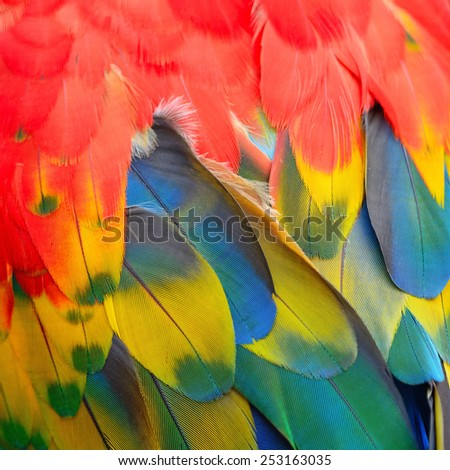 Beautiful bird feathers, Scarlet Macaw feathers pattern background