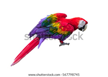 Beautiful bird isolated with white background.