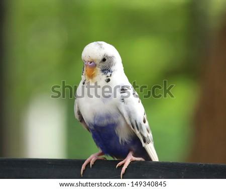 beautiful bird on nature background - stock photo