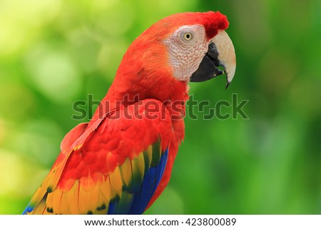 Beautiful bird, Red-and-green Macaw,Greenwinged macaw, parrot