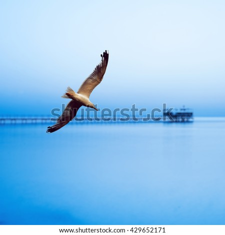 Beautiful bird seagull flies over sunrise at the sea - stock photo