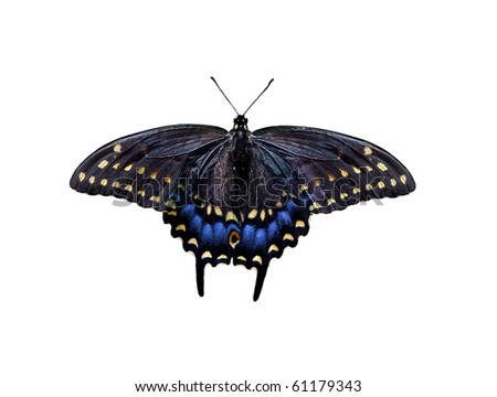 Beautiful black and blue butterfly isolated on white