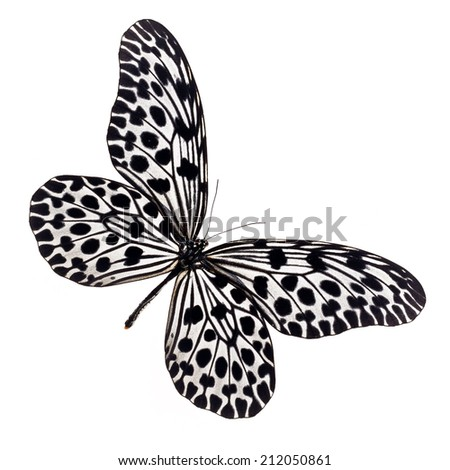 Beautiful black and white Butterfly