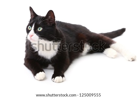 Beautiful black and white cat over white background