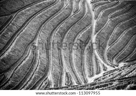 Beautiful black and white vineyards picture of the Douro Valley, Portugal that illustrators the viticulture and heritage