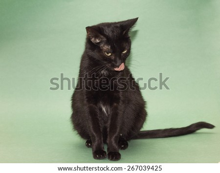 Beautiful black cat licked at camera, on green backdrop - stock photo