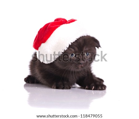 beautiful black kitten in red hat celebrating christmas isolated on white - stock photo