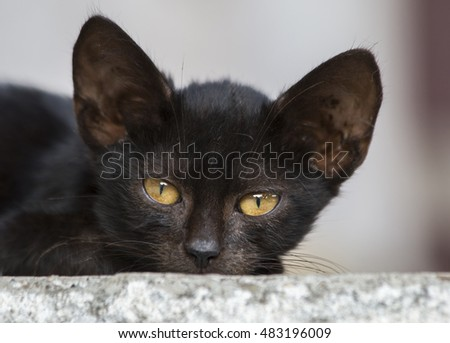 Beautiful black kitty with big eyes lying on the ground and watching in camera. Close up shot.