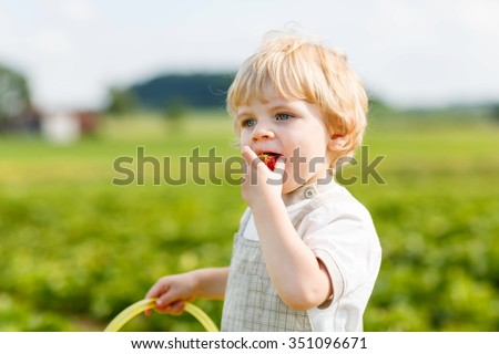 Beautiful blond little toddler kid boy picking and eating strawberries on organic pick a berry farm in summer, on warm sunny day. Harvest fields. Healthy food children. Gardening and farming concept - stock photo