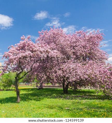 beautiful blooming apple garden in the photo - stock photo