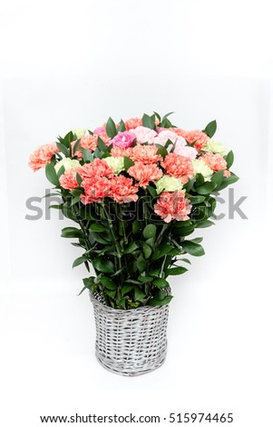 Beautiful blooming color carnations in a bucket on a white background.