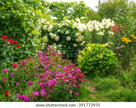 beautiful blooming flowers in the garden in summer. Hydrangea, Turkish carnation, lily, rose in the garden - stock photo