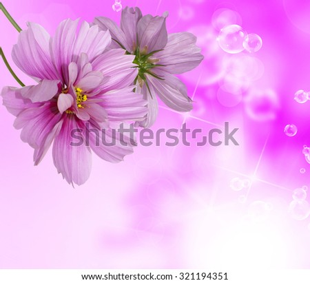 Beautiful blooming flowers on abstract background - stock photo