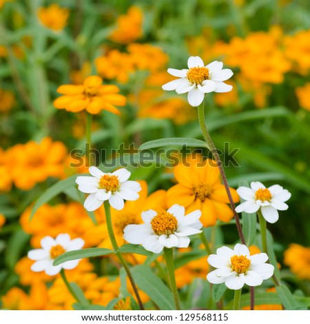 Beautiful blooming flowers orange color - stock photo