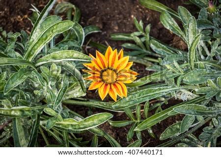 Beautiful blooming flowers orange color. - stock photo