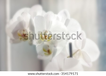 Beautiful blooming flowers white orchid in daylight