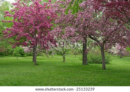 Beautiful blooming orchid in spring. - stock photo