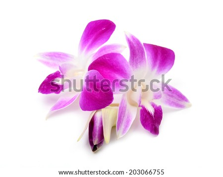 beautiful blooming orchid isolated on white background