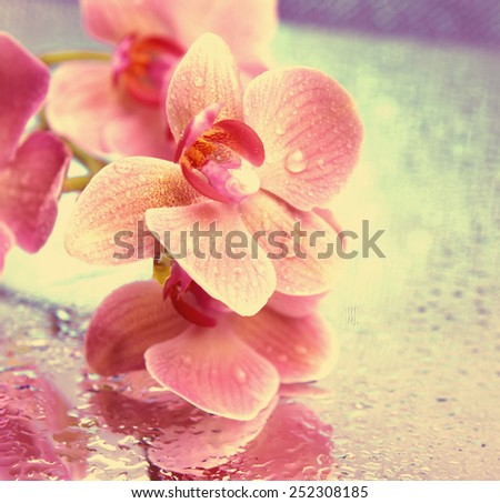 Beautiful blooming orchid on bright background - stock photo