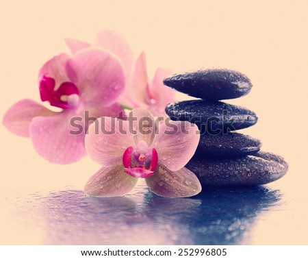 Beautiful blooming orchid with spa stones on light color background