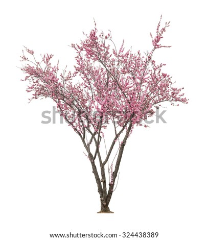 beautiful blooming pink tree isolated on white background  - stock photo