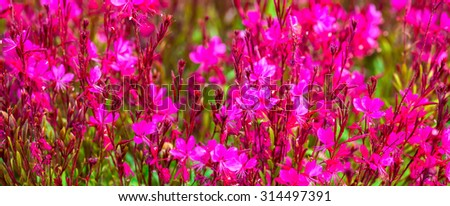 beautiful blooming red blur flowers background, panorama  - stock photo