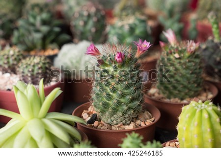 Beautiful blooming wild cactus flower in market - stock photo