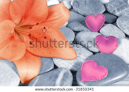 beautiful blossom of a lily flower with little stones and pink hearts