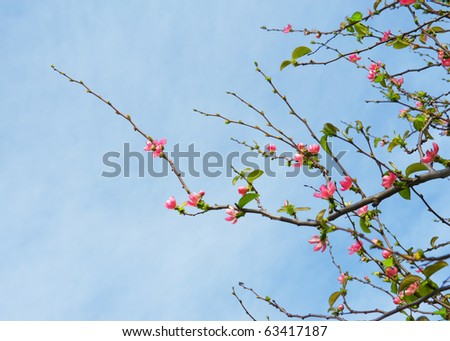 Beautiful blossoming tree in the spring park - stock photo